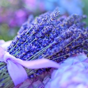 Lavendelöl reduziert Ängste
