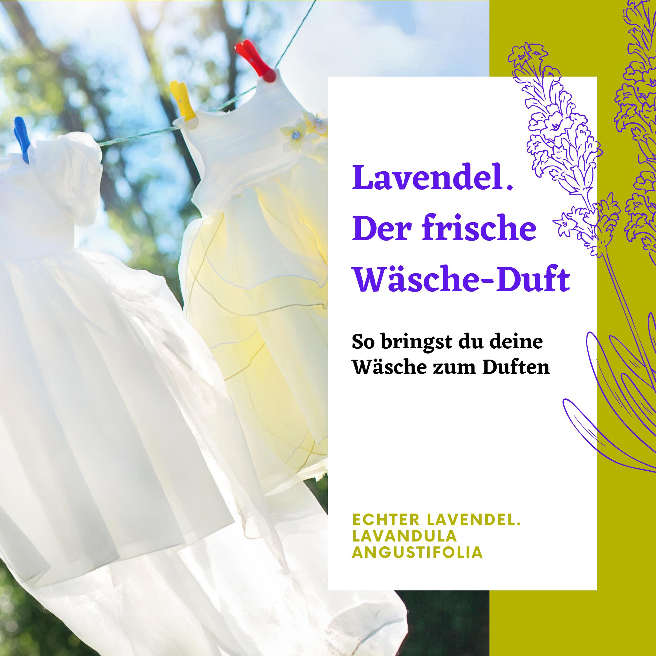 Frische Wäsche flattert im Wind mit Lavendelduft