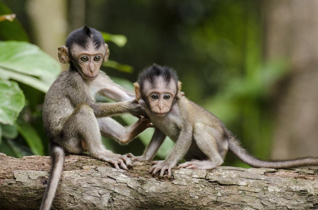 Zwei Affenjunge, Kosmetik ohne Tierversuche