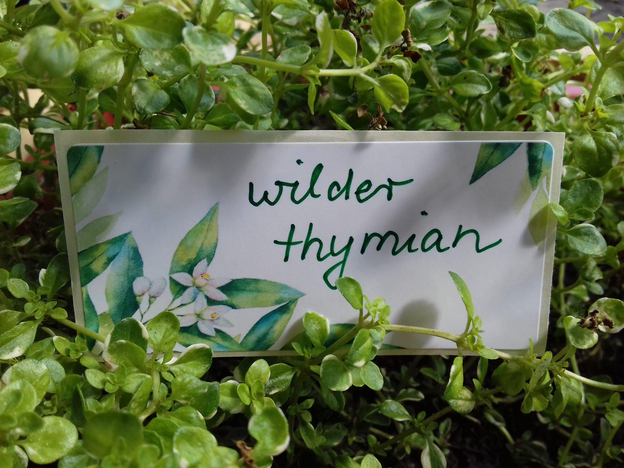 wilder Thymian: Der Name meines Unternehmens